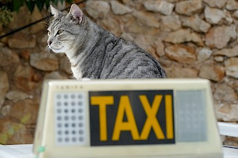 (Dieren)Taxiservice | japatish